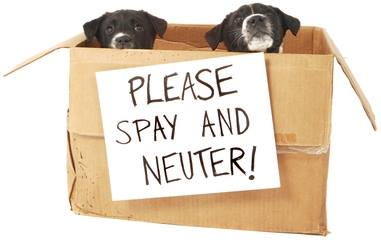 Pet Awareness 3
